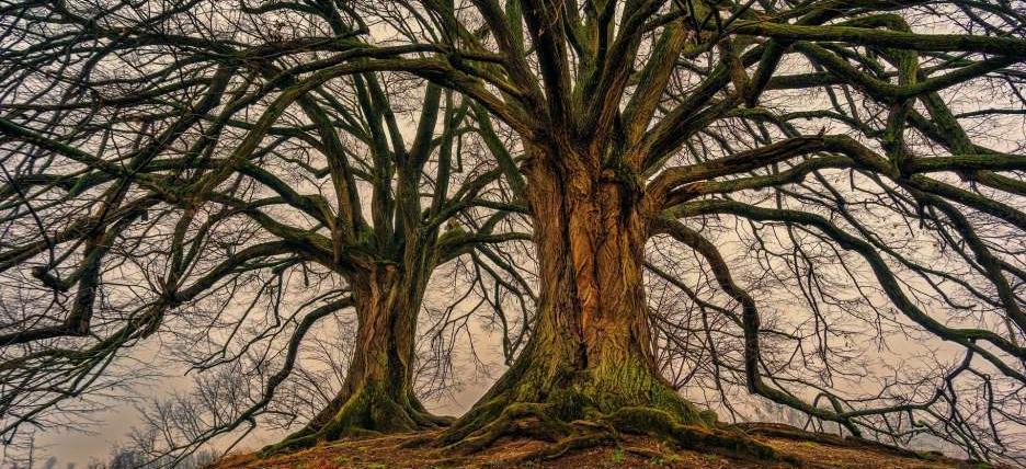 Drohne in Baum