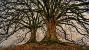 Drohne im Baum