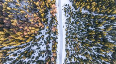 Drohne Luftbild Wald