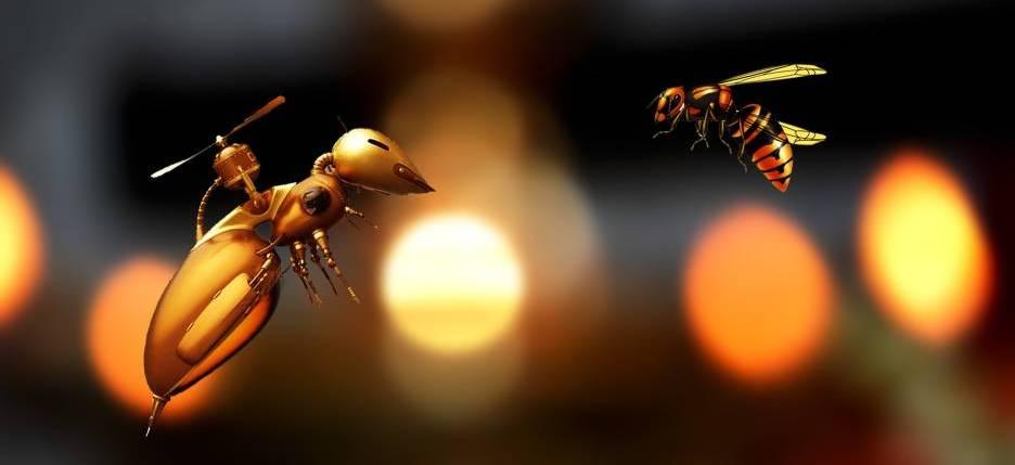Drohne Biene Insekten