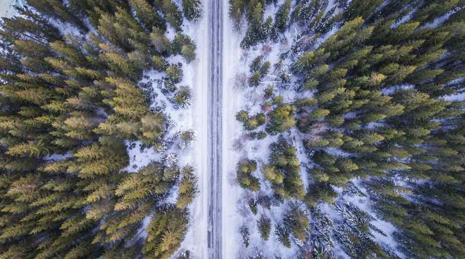 Drohne über Waldstück